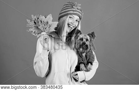 Girl Hug Cute Dog And Hold Fallen Leaves. Woman Carry Yorkshire Terrier. Take Care Pet Autumn. Veter