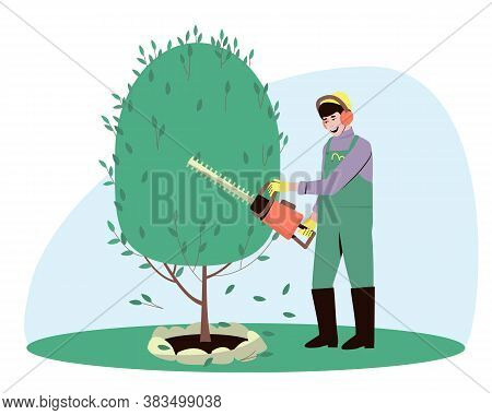 A Gardener Trims A Bush Tree Plant With A Hedge Trimmer. The Man Is Engaged In Landscape Design. Sum
