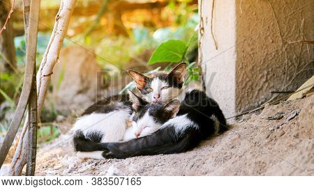 Two Cats Cuddling Sleeping In The Sunlight Together For Keep Body Warm In Winter