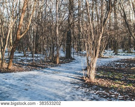 Little Snow On A Clear Winter Day In The Forest, Moscow