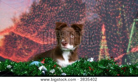 Holiday Puppy Portrait