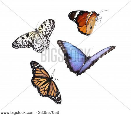 Amazing Different Butterflies Flying On White Background