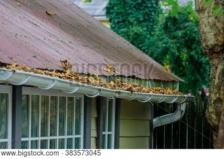 Dirty Roof With Iron Gutter With Autumn Leaves Requiring Cleaning