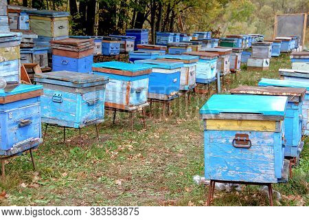 Apiary With Wooden Old Beehives In Autumn Forest. Preparing Bees For Wintering. Beekeeping. Warm Wea