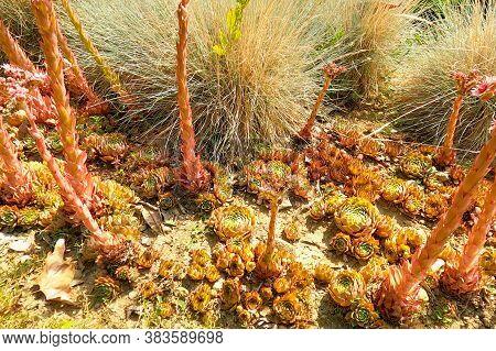Desert, Cactus In Desert, Tatacoa Desert, Columbia, Latin America, Clouds And Sand, Red Sand In Dese