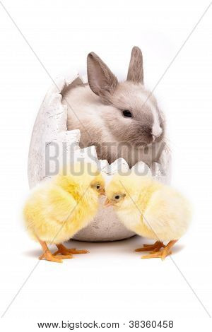 Chick & Bunny