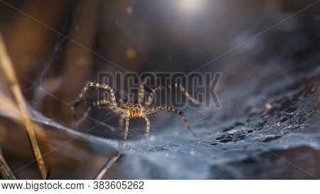 beautiful yellow spider on its web macrophotography. slim and elegant arachnid but dreadful predator for insects stuck on its spider web, ruthless trap, somewhere in the tropical jungle of Thailand