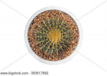 Top View Small Cactus In Pot Isolated On White Background.