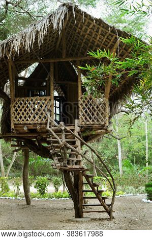Large bamboo tree house. Tropics. Tropical Green forest. Summer. Green leaf.