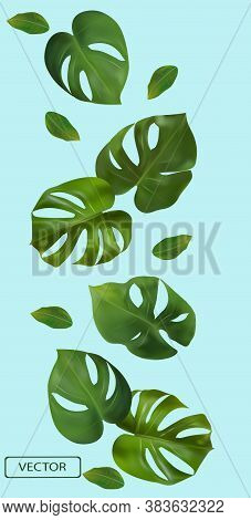 Tropical Green Leaves Monstera On A Blue Background. Banner For Perfumes, Cosmetic Products, Medicin