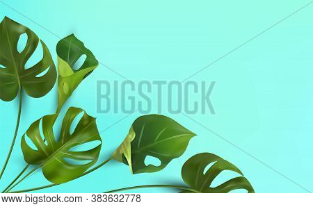 Background Of Tropical Leaves On A Blue Background, Tropical Foliage Monstera With Split-leaf Foliag