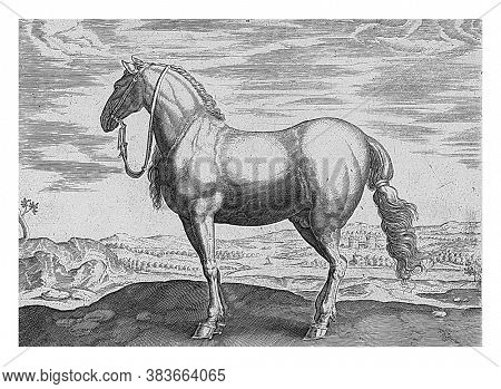 Horse from Northern Italy, anonymous, after Hans Collaert (I), after Hendrick Goltzius, after Jan van der Straet, 1624 - before 1648 A Northern Italian horse in a landscape, vintage engraving.