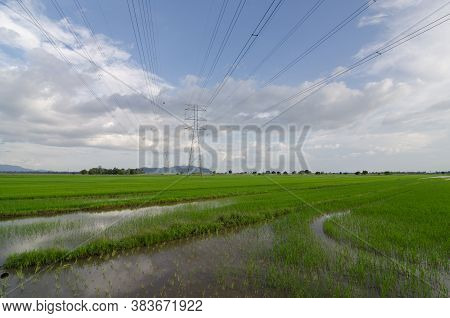 Paddy Field With Electric Tower Under Blue Sky