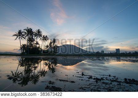 Reflection Row Of Coconut Tree In The Morning Of Permatang Rawa, Bukit Mertajam, Penang.
