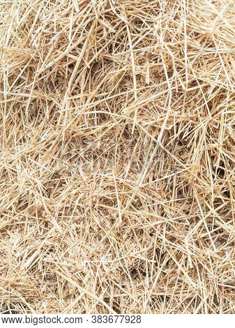 Hay Texture. Hay Bales Are Stacked In Large Stacks. Harvesting In Agriculture.