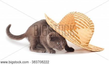 Kitten In A Hat. One Adorable Kitten In A Hat Isoalated On White.