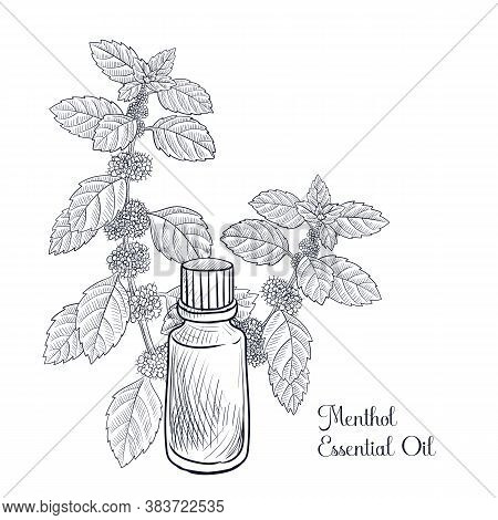 Vector Drawing Menthol Essential Oil, Mint, Hand Drawn Illustration
