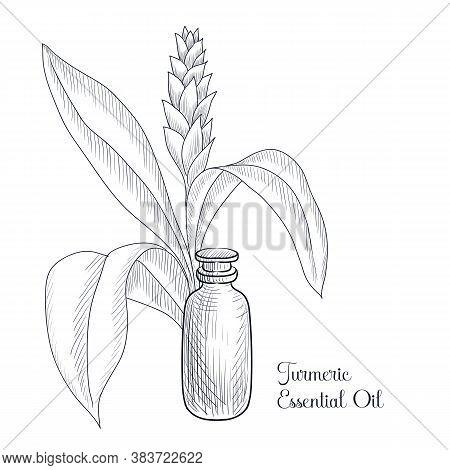 Vector Drawing Turmeric Essential Oil, Curcuma Longa, Hand Drawn Illustration