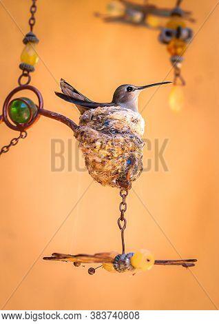 Mother Humming Bird In Her Pretty Nest