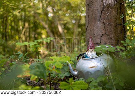 Garden gnome in the teapot