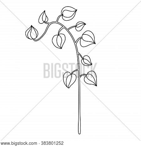 Physalis Plant In Doodle Style. Isolated Outline. Hand Drawn Vector Illustration In Black Ink On Whi