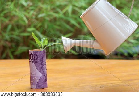 Rolled Banknote Money Ten Thousand Indonesia Rupiah And Young Plant Grow Up With Small White Waterin