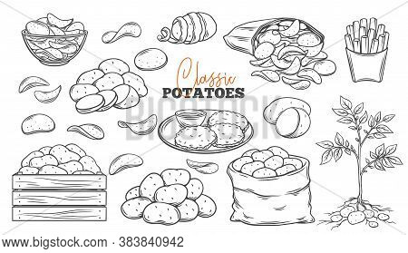 Potato Products Outline Icons Set. Engraved Drawn Monochrome Chips, Pancakes, French Fries, Whole Ro