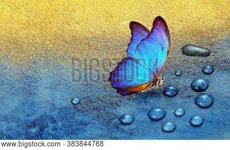 Butterfly On Dew Drops. Gold And Blue Background. Watercolor Paper Painted In Blue And Gold Paint. B