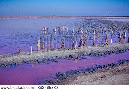 Salt, Brine And Mud Of Pink Salty Sivash Lake Near Azov Sea, Colored By Micro Algae Dunaliella Salin
