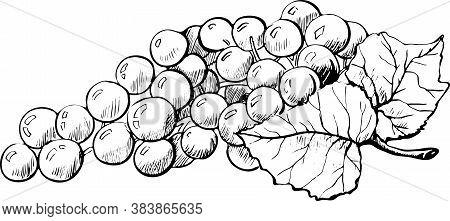 Bunch Of Grapes, Grapes With Leaves, Branch, Grapes, Contour Drawing By Hand Black And White