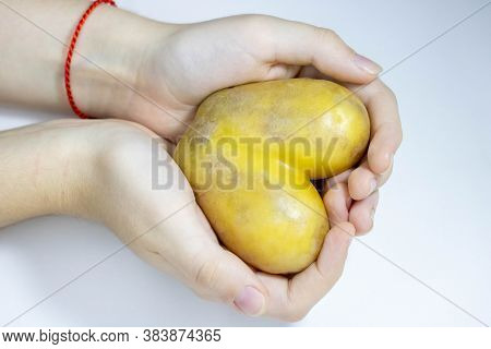 Hands Holding A Yellow Potato Heart On A White Background.space For Your Text