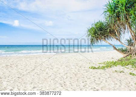 Sandy Beach And Blue Sea With Tree In Tropical