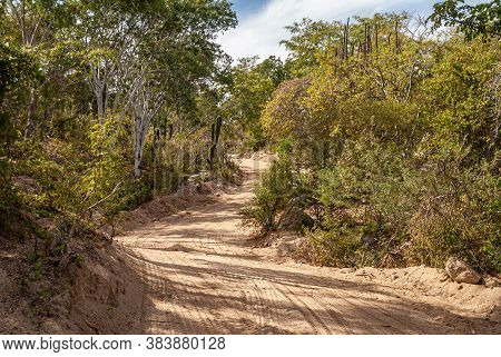 Baja California Sur, Mexico - November 23, 2008: Dry Forests Of Sierra De La Laguna. Sandy Dirt Road