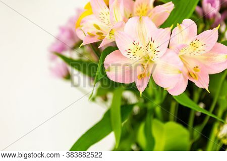 Beautiful Peruvian Lily Flowers Over A Bouquet Of Colorful Flowers With Copy Space For Your Text Or