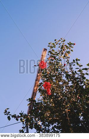 Low Angle Shot Of The Streetlight And Flowers In Natural Light
