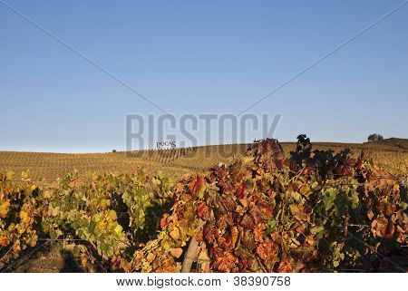 Vineyards At Douro River Valley, Portugal
