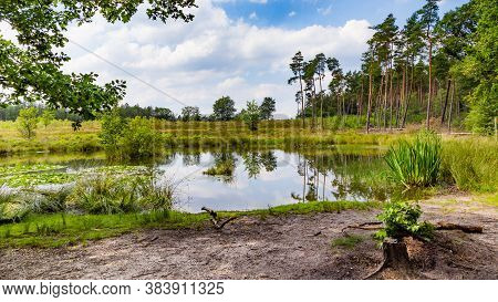A Beautiful Little Forest Fen Surrounded With Trees Near National Park De Hoge Veluwe In The Netherl