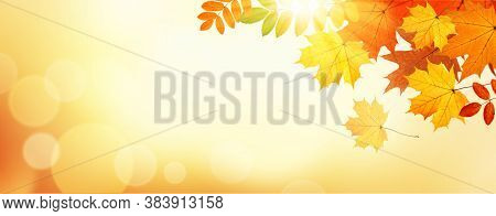Panorama Fall Autumn Leaves. Banner Border Frame Of Colorful Maple Leaves In Fall Season