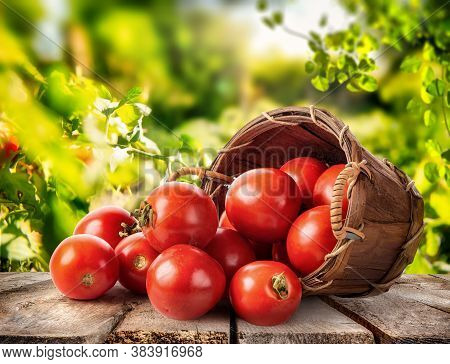 Fresh Tomato In A Basket On A Wooden Table, A Crop Of Vegetables