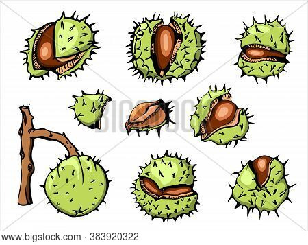 Horse Chestnut Vetor Illustration Set, Initially Hand Drawn With Ink, Vectorized And Colored. Bright