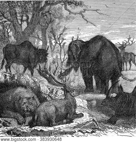 The primitive animals of Gaul. Vintage engraving. From Popular France, 1869.
