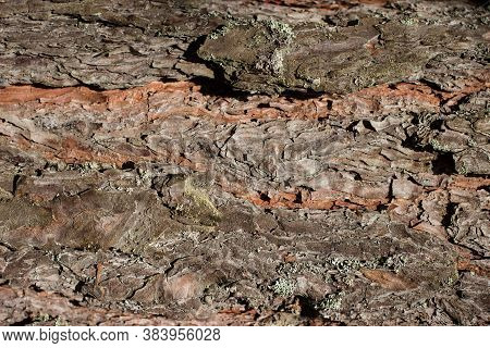 Tree Bark Texture Background. Harsh And Rough Texture Of Brown Color. Old Tree.