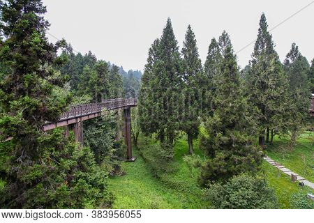 The Wood And Steel Sky Walkway Is Beautiful View Of Tree On Nature Graden In Alishan National Park A