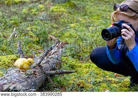 Young Woman Trekking Among Trees And Taking Pictures With Camera. Middle Age Woman Photographer Taki
