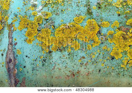 Background Iron Wall Peel Paint Yellow Moss Lichen
