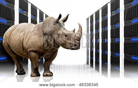rhino in  datacentre with lots of server