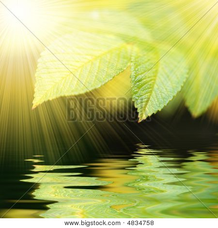 Green Vivid Leafs Witn Water Reflexion And Sunrays