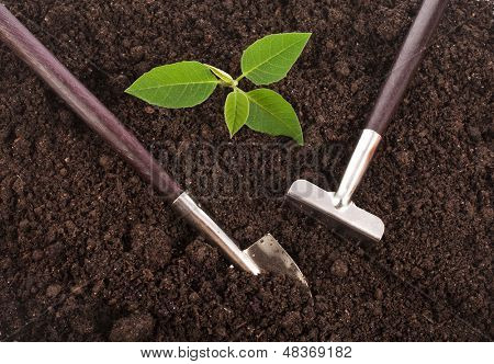 Surface ground soil close up with gardening tools and green seedling