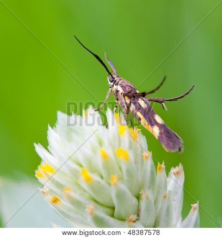honey insect collects flower nectar