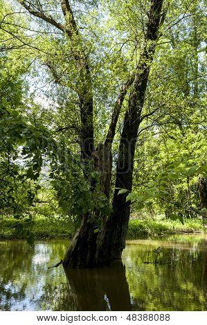 Central Europes Jungle In Austria.central Europes Jungle In Austria.central Europes Jungle In Austri
